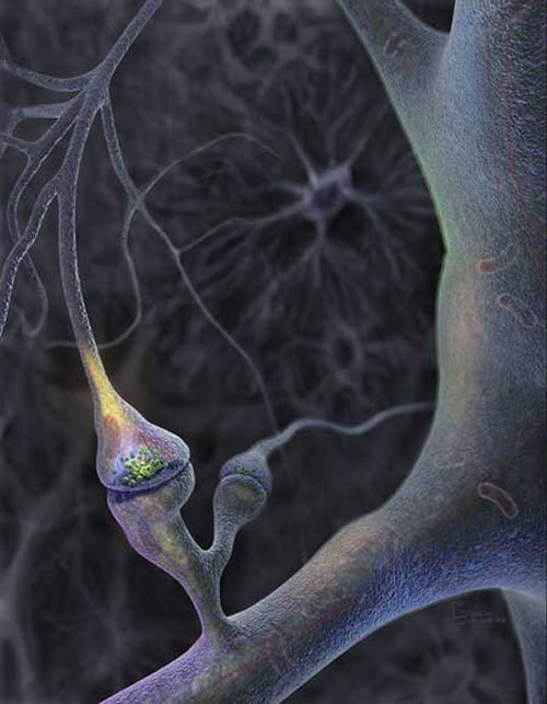051227_synapse_02