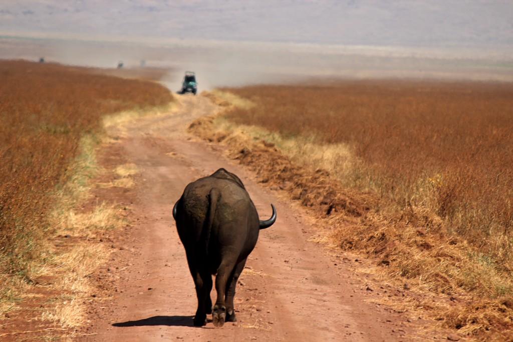 bull road trip